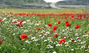la unica florecillas