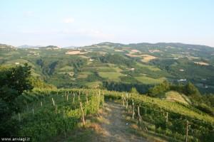 Belbo panorama con filari da Sant'Elena ©DDF